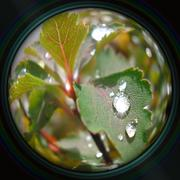 Raindrops on leaves in objective lens Stock Photos