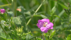 Mid Shot of wildflowers near lake at Gorodetske in Zhytomyr province, Ukraine Stock Footage