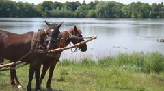Mid Shot of two horses and lake at Gorodetske in Zhytomyr province, Ukraine Stock Footage