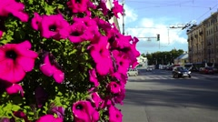 Beautiful Streets With Decoration Red Flowers Stock Footage