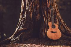 Acoustic guitar and the old tree. Stock Photos