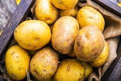 Idaho golden potatoes. raw potatoes in small wooden crate. Stock Photos