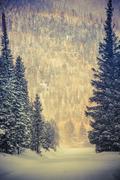 winter wonderland road. colorado winter. - stock photo