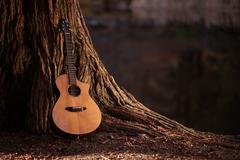 Stock Photo of wooden acoustic guitar and the tree music concept photo.