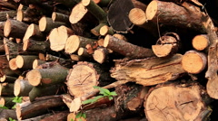 Big pile of woods in a forest road Stock Footage