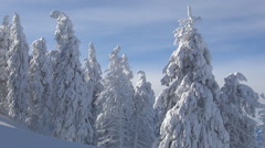 Trees cover by deep snow. Wonderful winter landscape. Mountain holiday. - stock footage