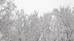 Snow covered trees tops Stock Footage