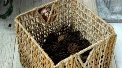 Cones collecting to wattled basket Stock Footage