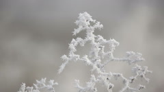 Hoarfrost covered dry grass on the roadside - stock footage