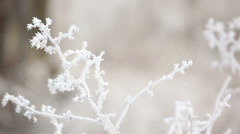 Hoarfrost covered dry grass. Frozen plant. - stock footage