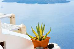 Pot with  plant island santorini, oia greece Stock Photos