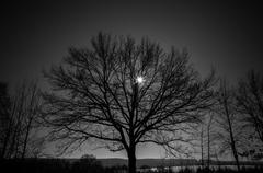 lonely tree - stock photo