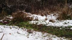 Snow winter landscape Stock Footage