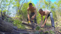 Two men harvest firewood Stock Footage