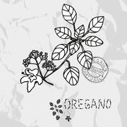 hand drawn oregano plant with flowers, design elements. culinary spices - stock illustration