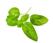 ocimum basilicum - stock photo