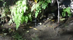 Creek in Griffith Park Stock Footage