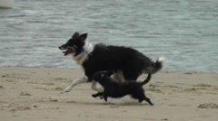 Slow motion of two dogs running next to each other on a sandy beach Stock Footage