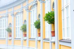 decorative orange tree on the facade of the building - stock photo
