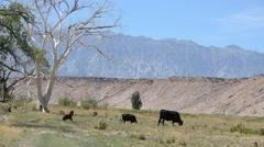 Sierra Nevada Mountains - stock footage