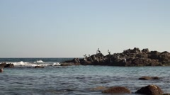 Pelicans on the rocks Stock Footage