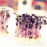 gmo plant in biological laboratory - stock photo