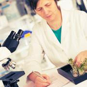 woman study of genetic modified gmo plants in the laboratory - stock photo