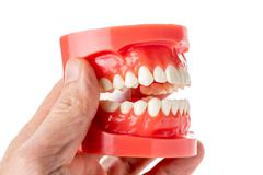 dental jaw model in hand - stock photo