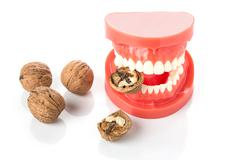 dental jaw model with walnuts - stock photo