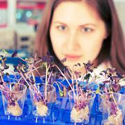 Woman study of genetic modified gmo plants in the laboratory Stock Photos