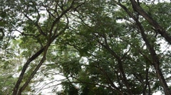 Nature tree and wind at public park in Nonthaburi Thailand Stock Footage