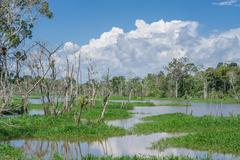 Amazon forest and black river Stock Photos