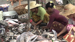 Mandalay, Women sorting fish on the ground at the fish market - stock footage