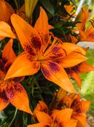 Petals, stigma and anthers of an orange lily Stock Photos