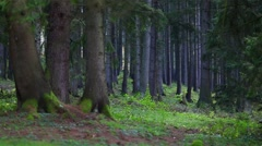 Little green sapling in the forest with colorful leaves - stock footage