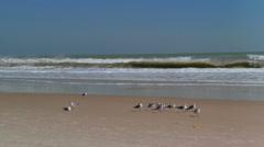 Shore birds along Cocoa Beach. Stock Footage