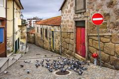 alley with pigeons - stock photo