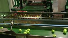 Apple processing and packing on a conveyor belt Stock Footage