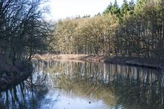 forest with reflection in water - stock photo
