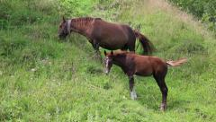 Two horses on the pasture Stock Footage