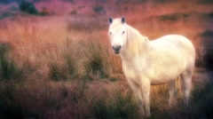 Magical Horse In A Dream Stock Footage