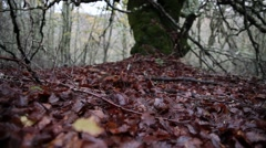 A walk in a forest in Autumn Stock Footage