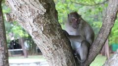 Monkey sit on tree Stock Footage