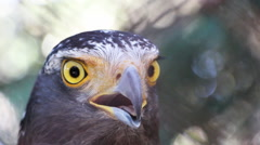 Eagle closeup Stock Footage