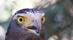 Eagle closeup Stock Footage