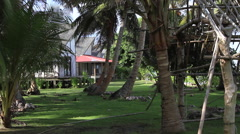 Jungle Tree House on Micronesian Island of Yap Stock Footage