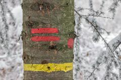 Yellow and red stripe trail on a tree Stock Photos