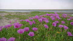 Wildflowers at Rameswaram in Tamil Nadu, India Stock Footage
