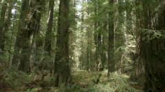 Redwood grove sideways 2in california 2014 Stock Footage