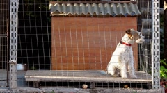 Fox terrier dog in cage Stock Footage